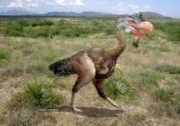 Британские учёные заявляют, что в 2050 году вновь появятся динозавры