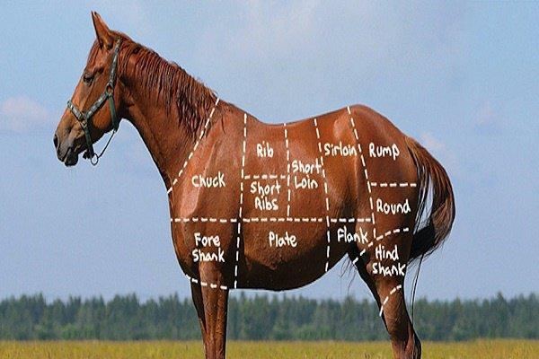 Разрешено ли употреблять в пищу конину?