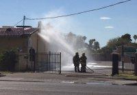На мечеть в Аризоне напали пчелы-убийцы (Фото)
