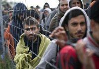 Рекордное количество прошений об убежище зафиксировано в Германии