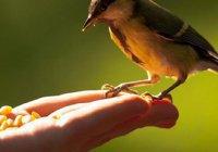 5 поклонений, которые увеличивают материальное состояние