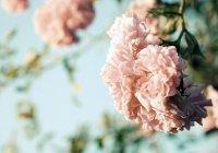 Аллах обещал Свое прощение тем, кто...