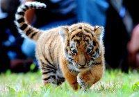 Какие животные попадут в Рай?
