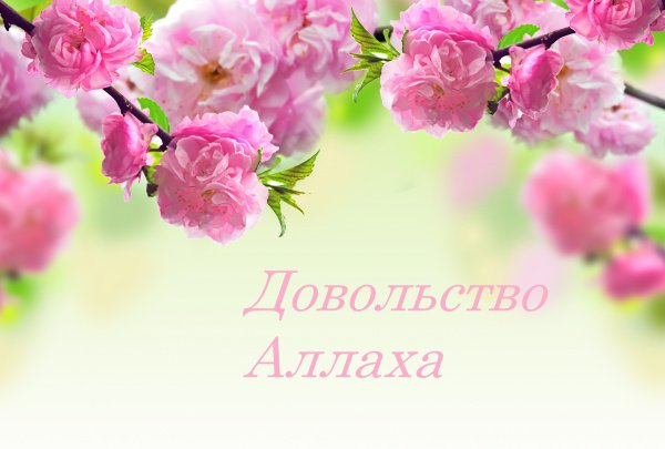 Довольство Всевышнего Создателя – одна из главных целей любого верующего