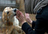 Кадыров создал в Грозном приют для бездомных животных (Видео)
