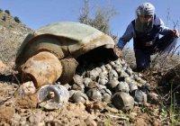 Саудовская Аравия использовала в Йемене запрещенные бомбы