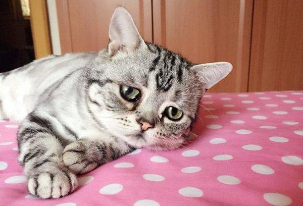 По словам шейха, фото с кошками – подражание западной моде.