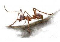 В янтаре найден древний муравей-единорог