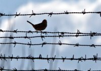 По случаю Рамадана в ОАЭ освободят больше 1000 заключенных