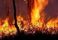 Лесной пожар в Аризоне