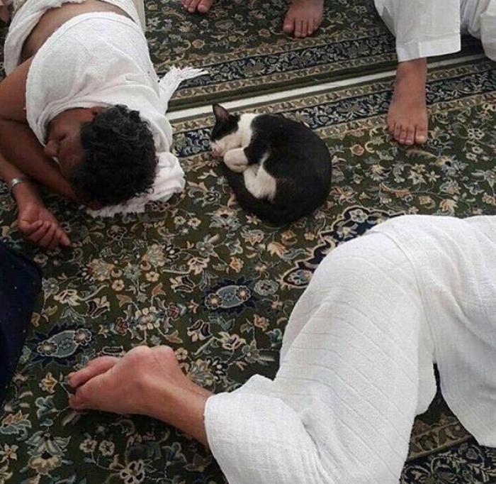Идиллия в Запретной мечети
