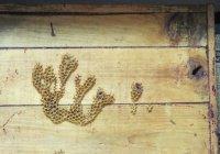 Слово «Аллах» появилось на пасеке казанского медресе (Фото)