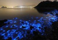 The Guardian: на пляжи Средиземноморья надвигается бактерия-убийца
