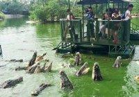 Туристы в пруду с крокодилами