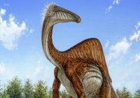 В Боливии обнаружен гигантский след динозавра