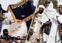 СМИ: ИГИЛ и «Талибан» объединились против США