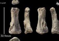 Древнейшие на Земле человеческие останки найдены в Саудовской Аравии