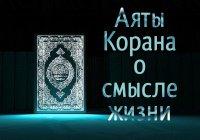 Аяты Корана о смысле жизни