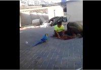 Настырный попугай не дает совершить намаз сыну с отцом