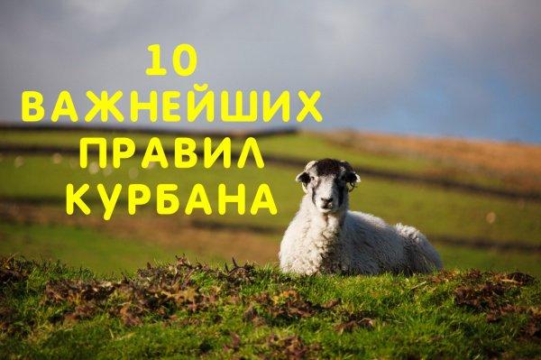 10 важнейших правил курбана
