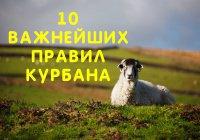 10 важнейших правил совершения курбана