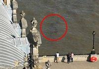 Морское чудовище в Темзе (ФОТО)