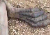 В Китае найдено тело дракона (Видео)