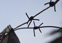 Медовый месяц в ИГИЛ обернулся для молодоженов тюрьмой