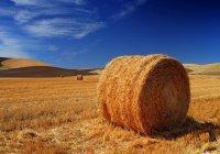 Мечети Дагестана займутся сельским хозяйством