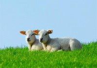 Животных с этими недостатками нельзя приносить в жертву