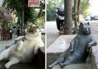 В Стамбуле установили памятник в честь всемирно известного задумчивого кота