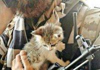 ИГИЛ объявило кошек вне закона