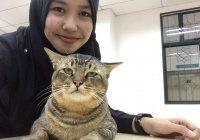 Любимое животное Пророка (ﷺ) полюбило посещать лекции в Исламском университете Малайзии