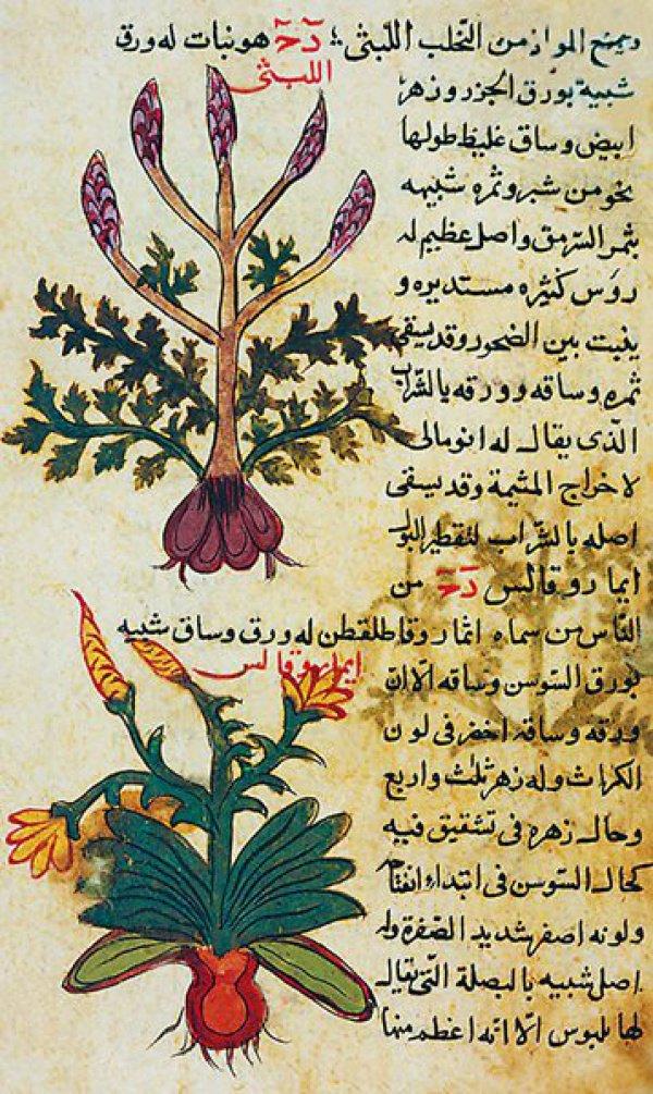 """Страницы из """"Книги противоядий"""" - уникального ботанического трактата, изданного в Ираке в XIII веке."""