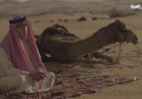 Поль Марсель: влюбленный в пустыню
