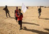 Иракские СМИ: в преддверии штурма жители Мосула шьют белые флаги