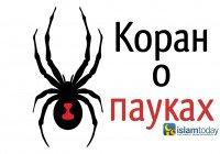 Коран о пауках: образец ненадежности и жестокости