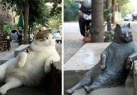 В Турции похитили памятник самому известному коту