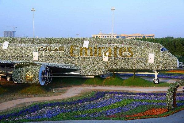Самолет из цветов.