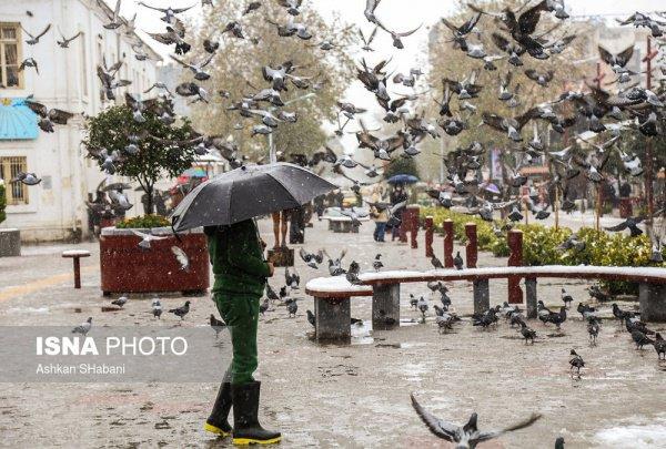катар жители фото
