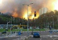 Мусульманские страны пришли на помощь охваченному огнем Израилю (Фото)