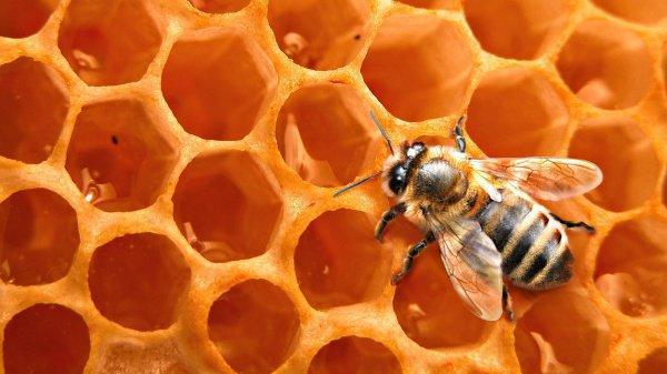 Спасение пчел как шаг к спасению человечества