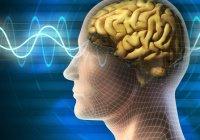 Пост улучшает работу мозга — ученые