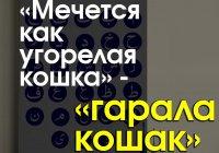 14 популярнейших русских фраз, пришедших к нам из арабского языка