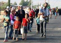 В 2016 году статус беженцев в Бельгии получили более 14 тыс. человек