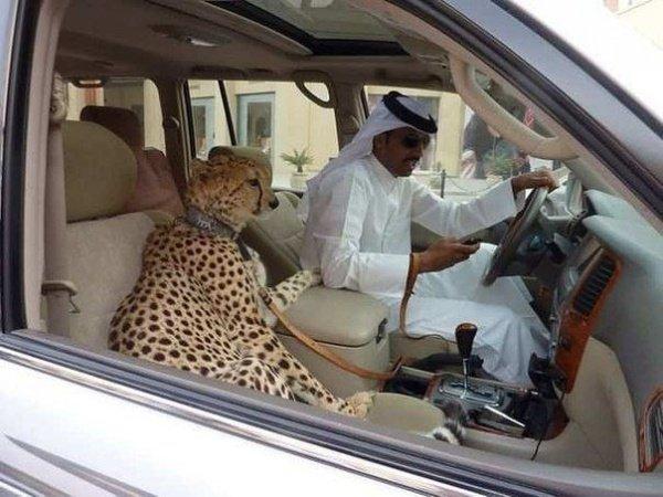 Арабским миллиардерам придется отказаться от экзотических питомцев.