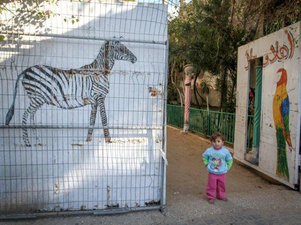 В Секторе Газа закрывается единственный зоопарк