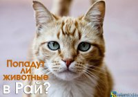 Попадут ли животные в Рай или Ад?