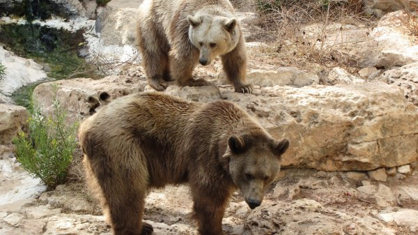 Медведи были зарегистрированы в районах, соседствующих с Казанью