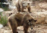 Бурые медведи стали постоянными соседями казанцев